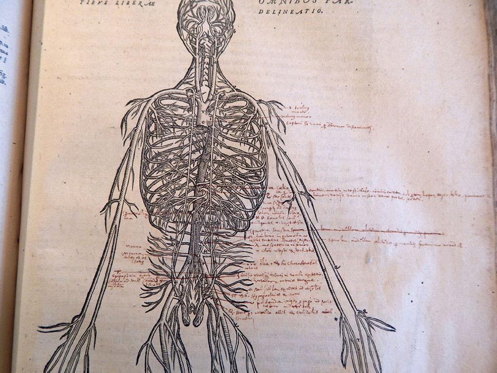 1555 Editions The Fabrica Of Andreas Vesalius