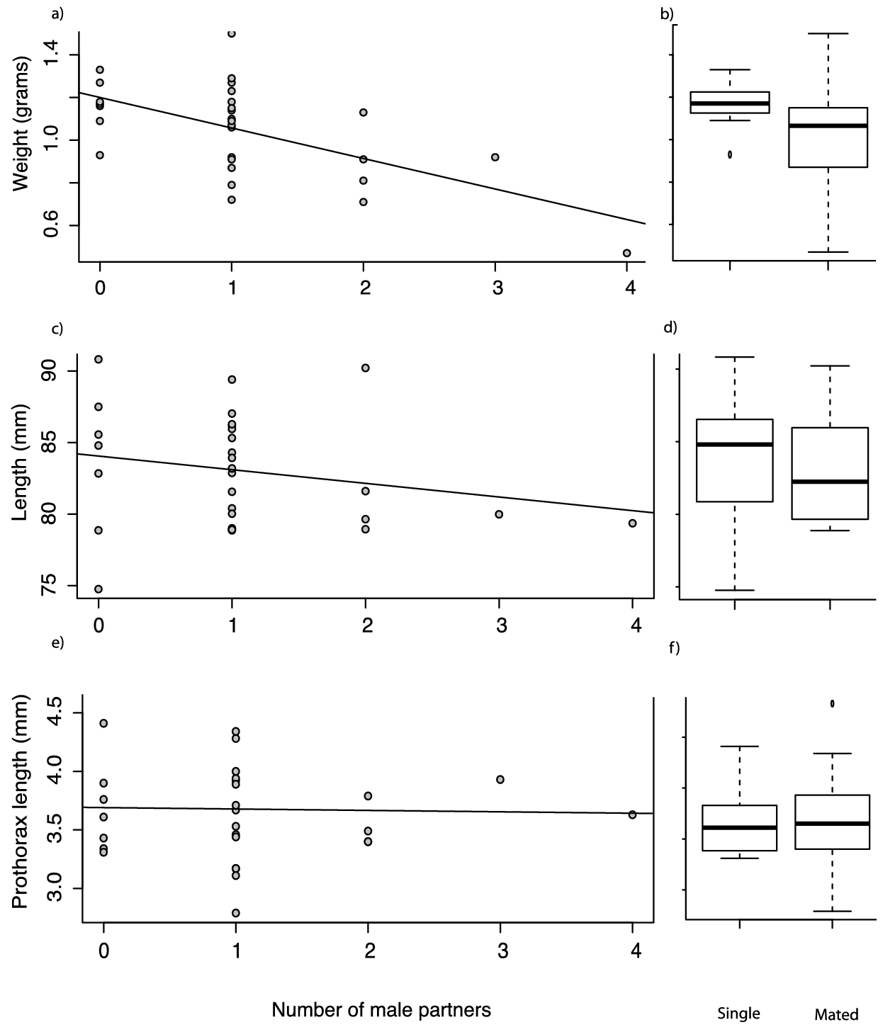 Mate Detection And Seasonal Variation In Stick Insect Mating