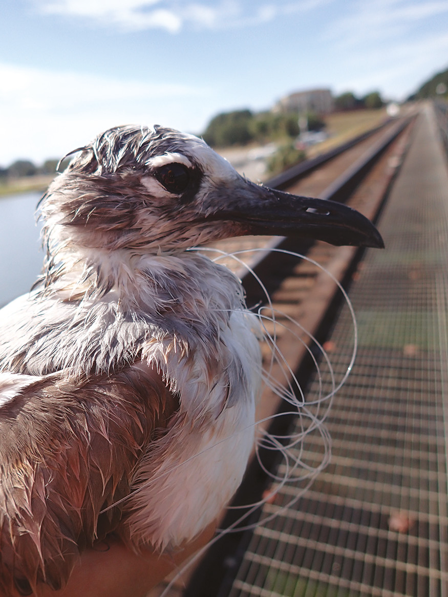Seabirds in: Fish, Justice, and Society