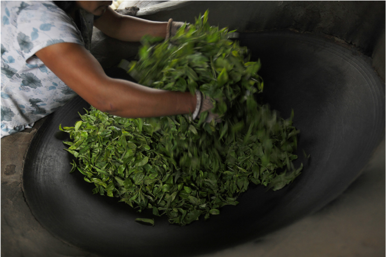 Tea Spreads to China in: The Tale of Tea