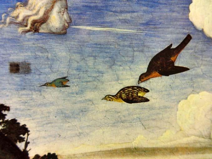 5 Rara Avis: Piero di Cosimo and the Birds He Painted 102 in: Piero