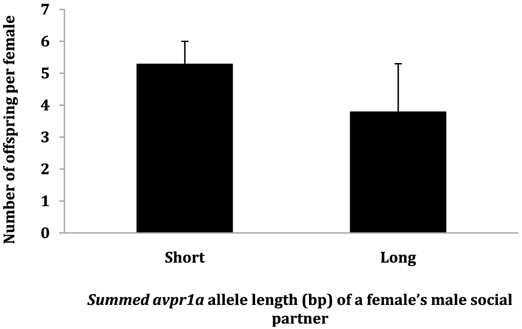 The role of avpr1a microsatellite length on reproductive