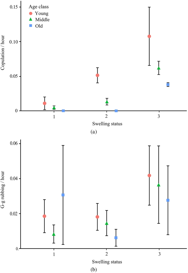 Prolonged maximal sexual swelling in wild bonobos
