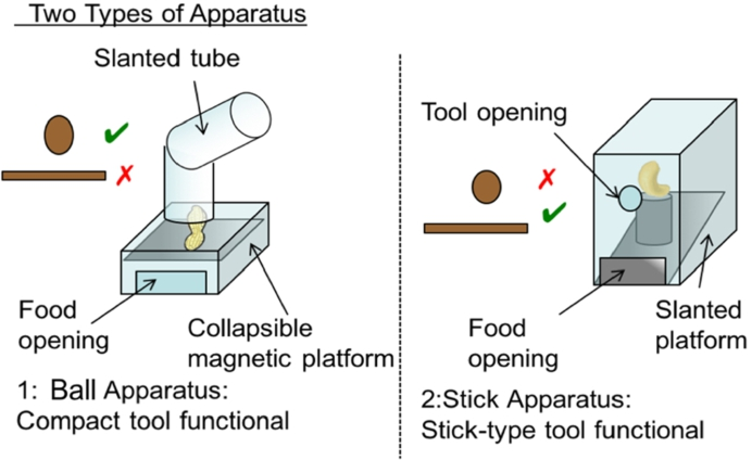 Prospective but not retrospective tool selection in the Goffin's