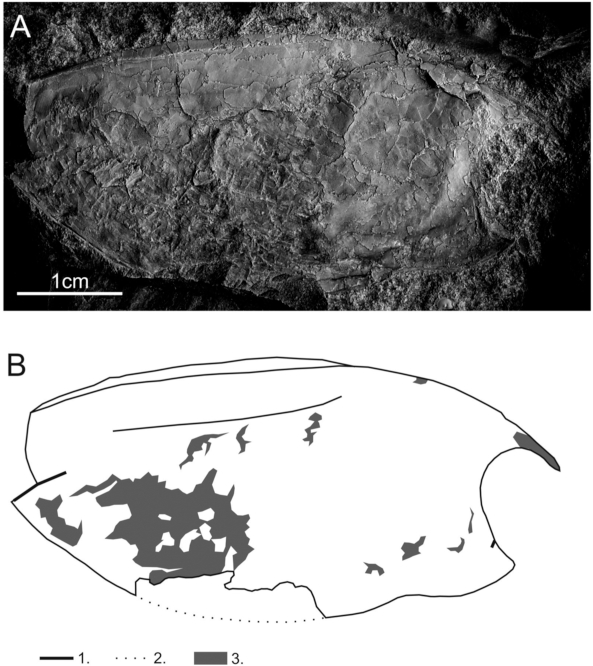 First Carboniferous thylacocephalan from Europe and its
