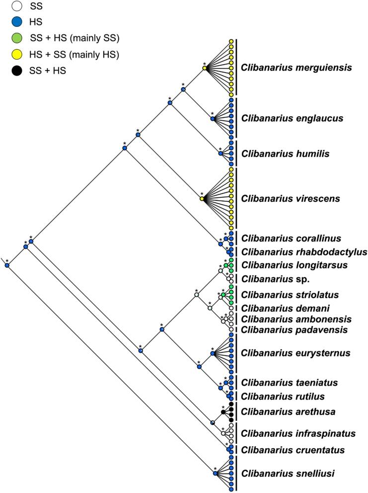 Molecular phylogeny of Clibanarius Dana, 1852 from the Indo