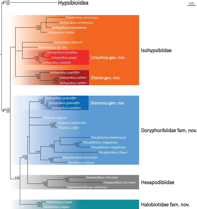Deceptive conservatism of claws: distinct phyletic lineages