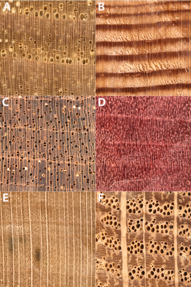 The Xylophone Toward Democratizing Access To High Quality Macroscopic Imaging For Wood And Other Substrates In Iawa Journal Volume 41 Issue 4 2020