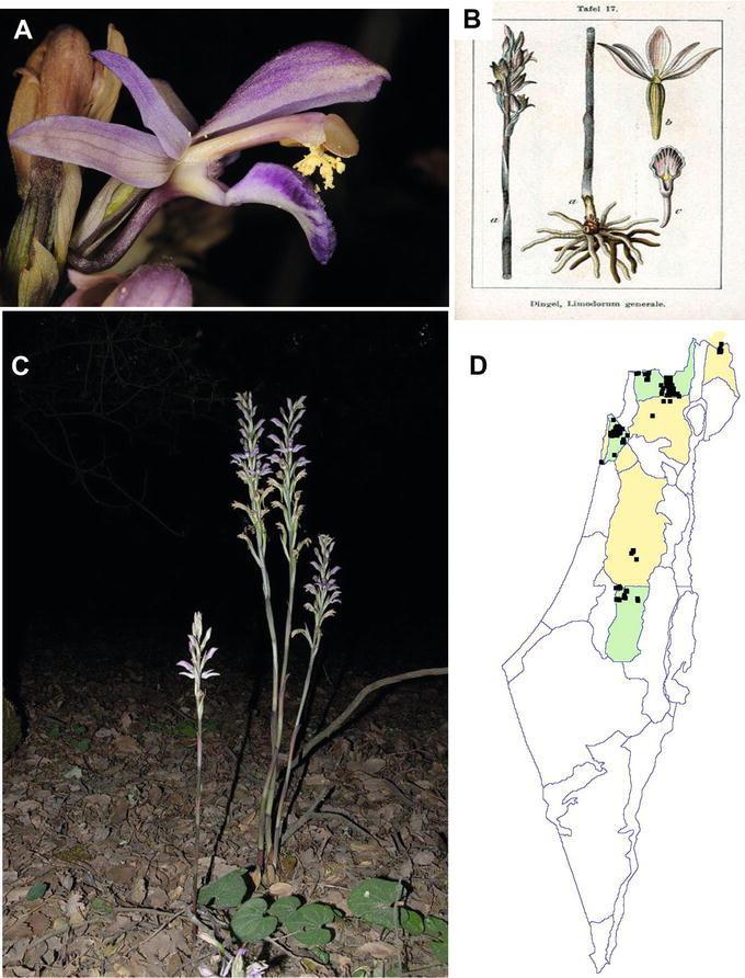 Habitat Bijzettafel Kilo.The Complete Plastid Genome Sequence And The Photosynthetic Activity
