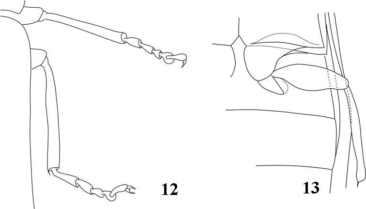Current Knowledge Of Coleoptera Insecta From The Lowermost Eocene