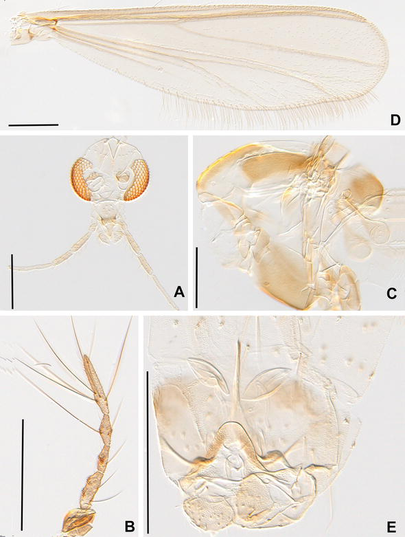 DNA barcodes and morphology reveal unrecognized species in