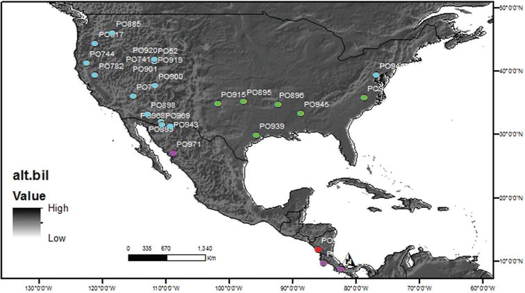 Phylogenetic species delimitation for the widespread spider