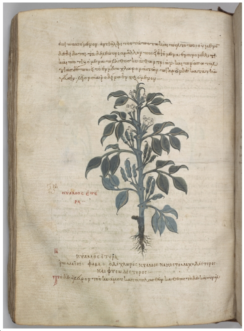 Translating Image and Text in the Medieval Mediterranean World