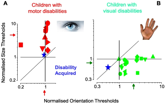 Multisensory Integration and Calibration in Children and Adults with