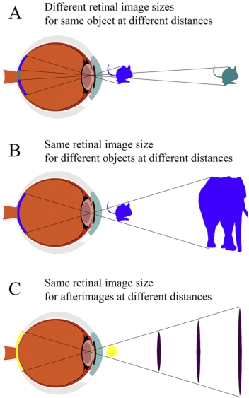The Mechanisms of Size Constancy in: Multisensory Research
