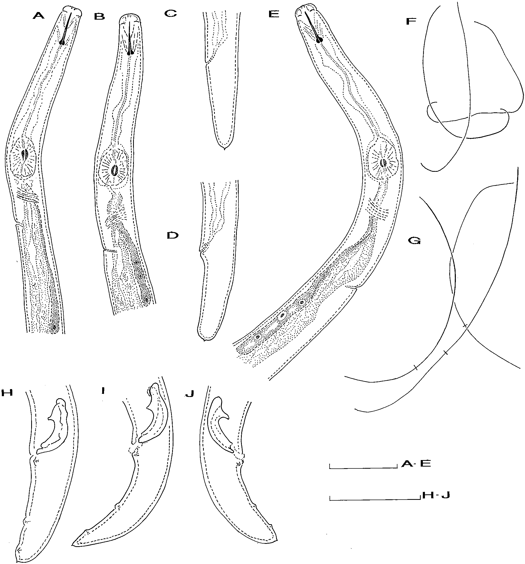 Morphological and molecular studies on Aphelenchoides