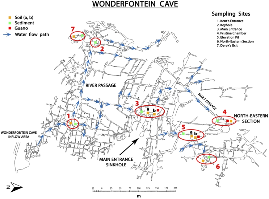 Nematodes of the Wonderfontein Cave (Witwatersrand Basin, South