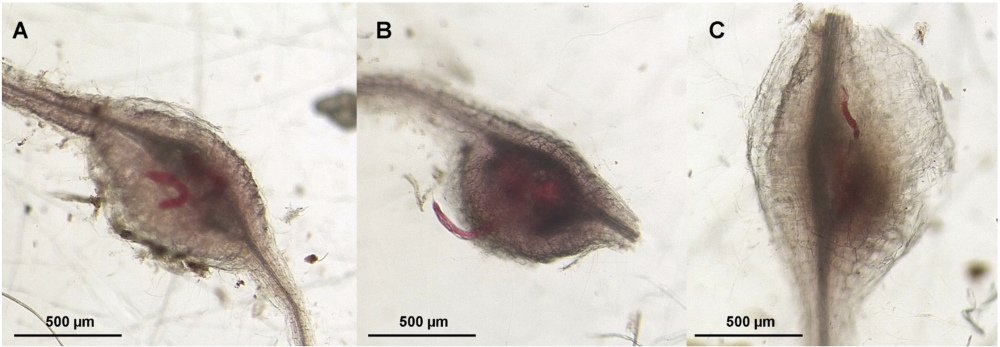 Differential feeding site development and reproductive