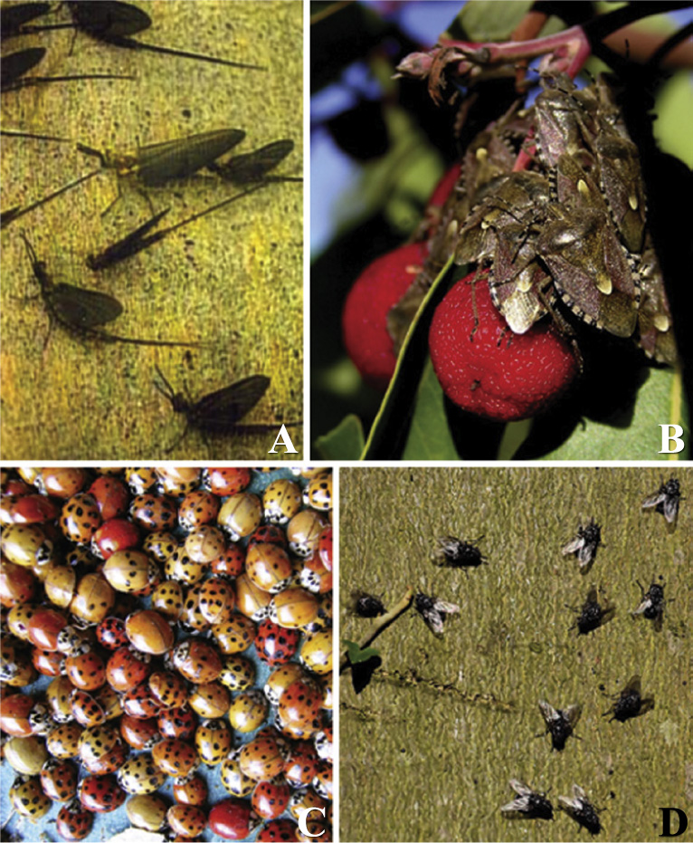 A natural history of conspecific aggregations in terrestrial